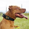 Coleira Para Cachorro Fit Lite (preto e verde militar)