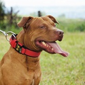 Coleira Para Cachorro Fit Lite - Vermelho e Preto
