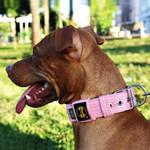 Coleira Para Cachorro Fit (rosa bebê)