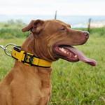 Coleira Para Cachorro Fit Lite (amarelo e preto)