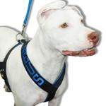 Peitoral Para Cachorro Personalizado Preto e Azul + Guia Curta