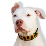 Coleira FIT Personalizada (preto e amarelo)