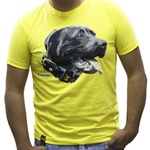 Camiseta PitBull Amorosso Amarelo
