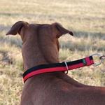 Colar Enforcador + Guia Curta 80cm - Vermelho e Preto