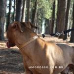 Colar de Ajuste Amorosso® (Bege/Preto)