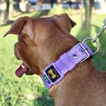 Coleira Para Cachorro Fit (lilás)