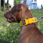 Coleira Para Cachorro Fit (amarelo)