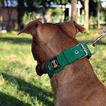 Coleira Para Cachorro Fit (verde)