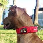 Coleira Para Cachorro Fit (vermelho)