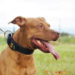 Coleira Para Cachorro Fit Lite (preto e azul marinho)