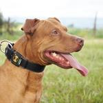 Coleira Para Cachorro Fit Lite (preto e marrom)