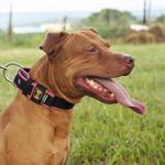 Coleira Para Cachorro Fit Lite (preto e pink)