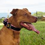 Coleira Para Cachorro Fit Lite (preto e rosa)
