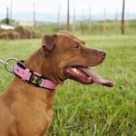 Coleira Para Cachorro Fit Lite (rosa e preto)