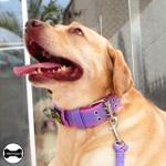 Coleira Para Cachorro Amorosso Slim + Super Guia Curta 80cm (lilás e rosa)