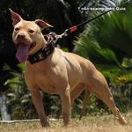 Coleira Para Cachorro Amorosso (preto e laranja)