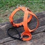 Peitoral Amorosso® (laranja e preto) + Guia Curta 80cm