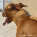 Coleira Para Cachorro Amorosso Slim + Guia (bege e caqui)