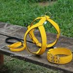Kit Tradicional Amorosso (Peitoral + Coleira + Guia) (amarelo e preto)
