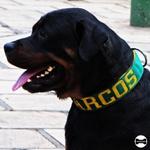 Coleira Para Cachorro Personalizada (verde e amarelo)
