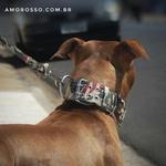 Coleira Amorosso® Camuflado USA + Guia USA