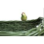 Cesta Pássaro Retangular Verde
