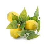 Porta guardanapo Limão Siciliano
