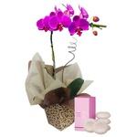 Orquídea e Aromas