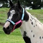 Cabresto Personalizado c/ nome do Cavalo, Haras, fazenda, etc...