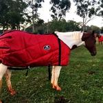 Capa de frio para Cavalo Azul Marinho Boots Horse