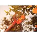 Colhedor De Frutas Grande Sem Cabo 25,7cm X 20cm - Tramontina
