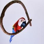 Arara Vermelha PP