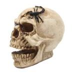 Crânio Escorpião