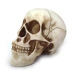 Crânio Médio Da Vinci
