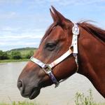 Cabresto para Cavalo Nylon Estampado Boots Horse 3907