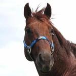Cabresto para Cavalo Nylon Estampado Boots Horse 3910