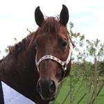 Cabresto para Cavalo Nylon Estampado Boots Horse 3911