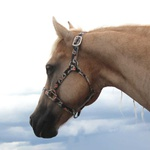 Cabresto para Cavalo Nylon Estampado Boots Horse 3912