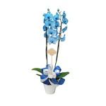 Orquídea Blue