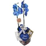 Orquídea Doce Azul