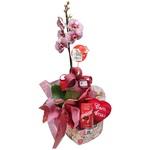 Orquídea Lindor