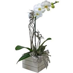 Vaso de Orquídeas Luxo - 1966123 - Bellas Cestas Online Salvador