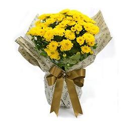 Mini Vaso de Margaridinhas Amarelas - 2302 - Bellas Cestas Online Salvador