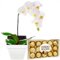 Orquídea Branca e Ferrero Rocher - 1500 - Bellas Cestas Online Salvador