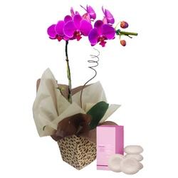 Orquídea e Aromas - FLORABARIGUI