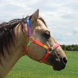 Cabresto para Cavalo Nylon Estampado Boots Horse 3902