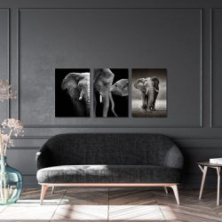 Kit 3 Placas Decorativas Elefantes - Q! Bacana