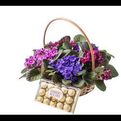 Cesta Com Violetas e Chocolate ! - 3078158 - Bellas Cestas Online Salvador