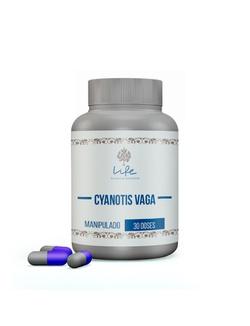 Cyanotis Vaga 250mg - 30 Doses - 36 - LIFEMANIPULACAO