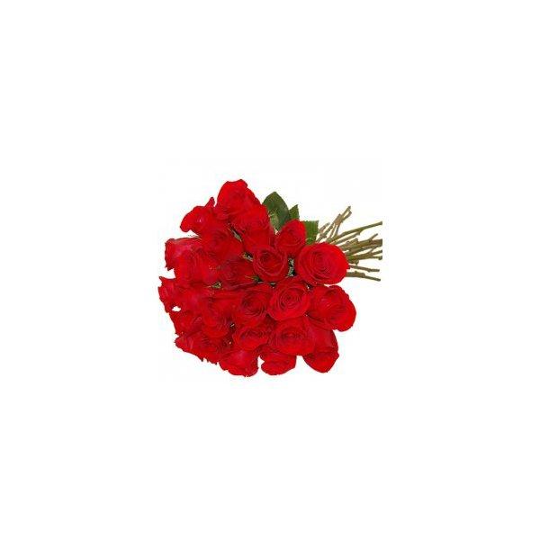 24 Rosas Nacional Te Amo